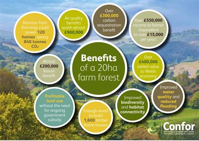 Farm forest benefits in Wales