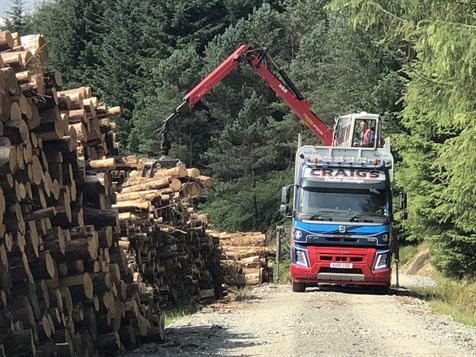 Loading logs to lorry in forest
