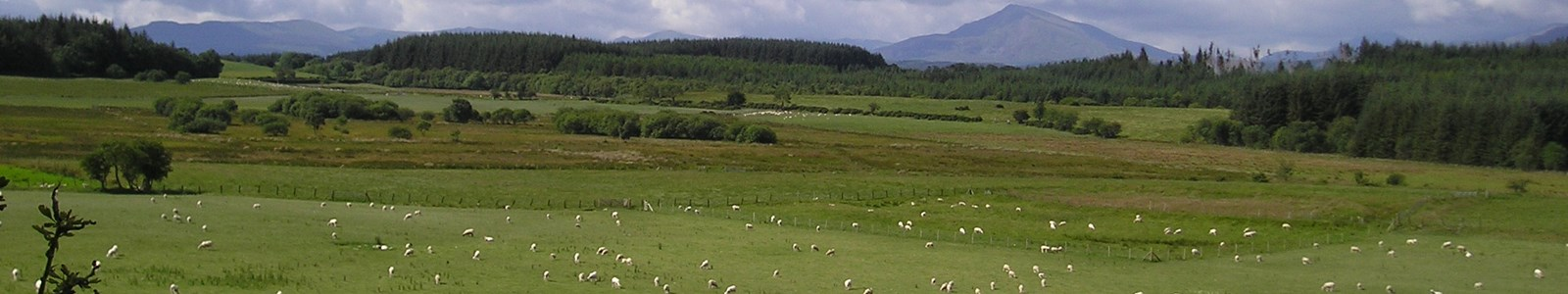 landscape with sheep and farm woodlands